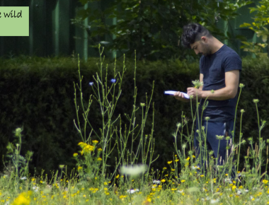 Man writing in a wild flower meadow
